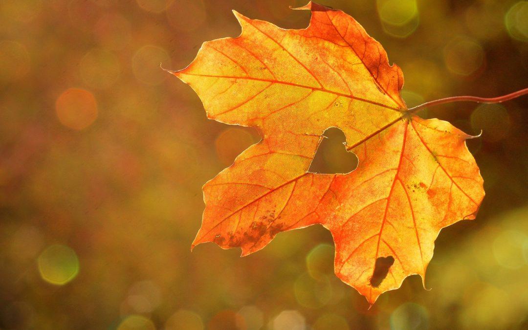 """Gesund & Glücklich- Yogabrunch- Sonntag """"Goldener Herbst"""""""